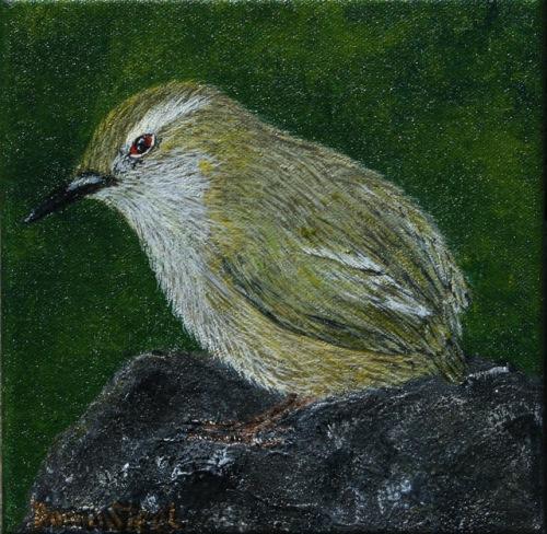 Piwauwau - Rock Wren